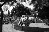 cirque equestre_11