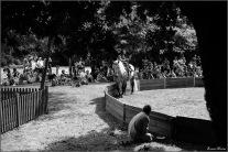cirque equestre_20